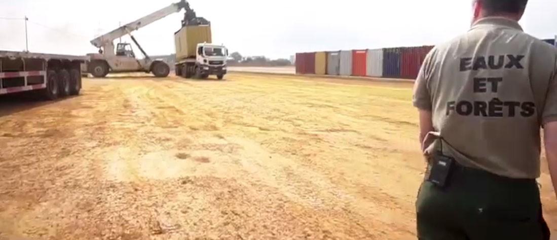 Trafic-de-bois-au-Gabon-125-conteneurs-de-Kevazingo-saisis.jpg